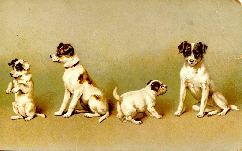 Cute Pups   (crease)