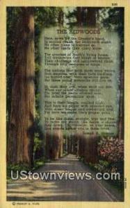 Redwoods, CA, California, Post Card