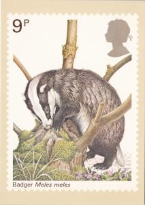 Stamps Of Great Britain Animals Badger Issued 5 October 1977
