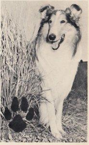 Lassie , 40-50s