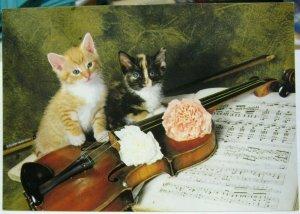 Postcard Cat Kittens Violins - unposted