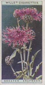 Wills Vintage Cigarette Card Wild Flowers Series No. 16 Greater Knapweed 1923