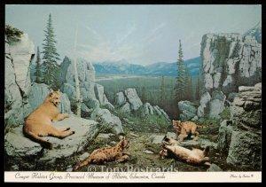 Cougar Habitat Group, Provincial Museum of Alberta, Edmonton