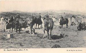 uk41997 baeufs a bosseou zebus africa sudan