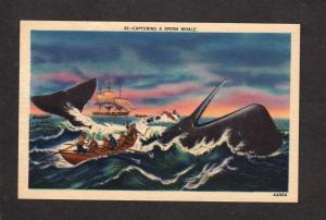 Sperm Whale Hunting Capturing Whales Whaling Sailboat Postcard