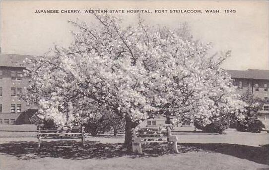 Washington Fort Steilacoom Japanese Cherry Western Hospital Artvue