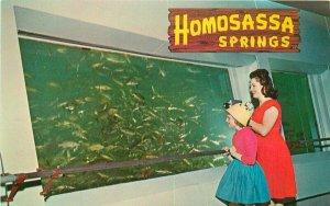 Fishbowl Homosassa Springs Tampa St Petersburg Florida 1950s Postcard 10216