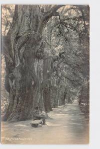 RPPC POSTCARD FOREIGN MEXICO CITY CHAPULTEPEC PARK MAN SITS UNDER TREE READING P