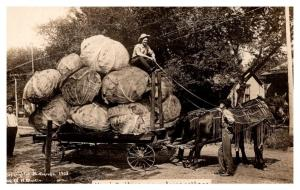 Exaggeration,  Cabbage on Wagon ,  RPC