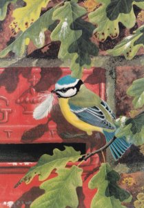 Warwickshire Blue Tit Bird Royal Mail Advertising Painting Postcard