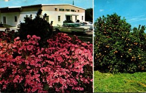 Florida Bradenton Mixon Fruit Farms