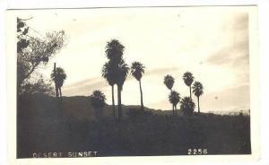 RP; Palm Tree shadows in Desert Sunset, 10-20s