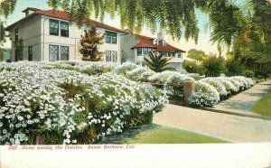 C-1905 Home Among Daises Santa Barbara California Selige Postcard 20-6525