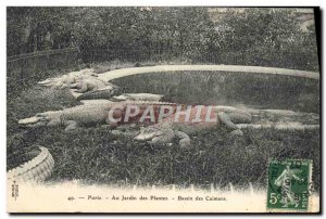 Old Postcard Paris Zoo Garden plants Basin caimans Caiman Crocodile