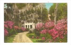Driveway To  The Pastern , Summerville, South Carolina, PU-1942