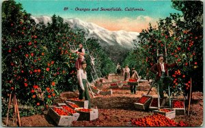 1910s California Agriculture Postcard Oranges & Snowfields Orchard Scene