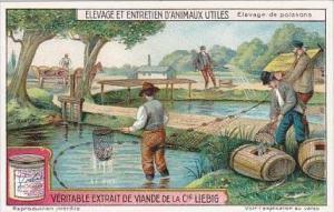 Liebig Trade Card S1176 Breeding Of Useful Animals No 4 Fish Farming