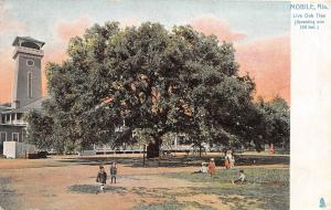 D60/ Mobile Alabama AL Postcard c1910 Live Oak Tree Spreading Over 100 Ft