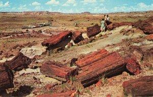 Postcard Desert Petrified Forest National Monument Arizona