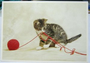Postcard Cat Kitten Ball of Red wool - unposted