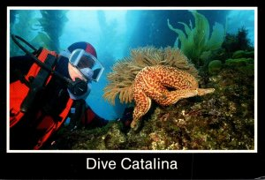 California Catalina IslandDive With Giant Spined Sea Star and California Gorg...