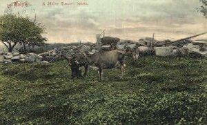 Pasture in Misc, Maine