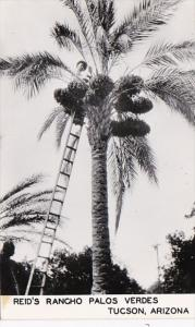 Arizona Tucson Reid's Rancho Palos Verdes Harvesting Dates Real Photo