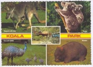 KOALA Park, Castle hill Road West Pennant Hills, Australia, 60-70s