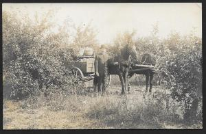 Well Dressed Man, Horse Drawn Cart & Picked Apples in Orchard RPPC Unused c1910s