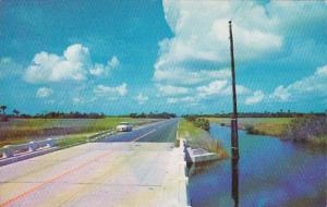 Florida Scene Along The Tamiami Trail
