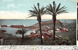 Portugal, Madeira, Camara de Lobos, palm trees, panorama 1905