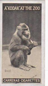 Carreras Cigarette Card Kodak At Zoo 1st Series No 42 Drill