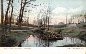 Philadelphia PA~Zoological Gardens~Zoo Beaver Dam~Foot Bridge~1905 Postcard