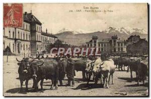 Old Postcard Gap square Lycee Fair Cows TOP