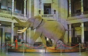 Washington D C African Bush Elephant Museum Of Natural History Smithsonian In...