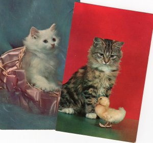 Two Fluffy Kittens / Cats With Duckling, Full Color Postcards, Portraits