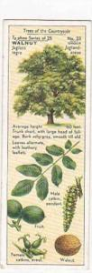 Typhoo Tea Vintage Trade Card Trees Of The Countryside 1936 No 23 Walnut