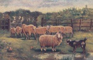 Dog Herding Sheep . 00-10s