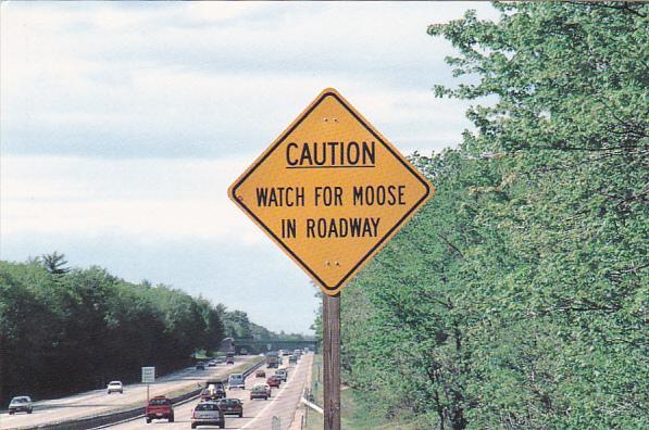 Moose Crossing New England Post Cahd