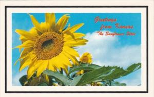 Kansas Greetings From The Sunflower State