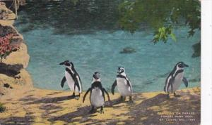 Missouri St Louis Penguins On Parade Forest Park Zoo 1944