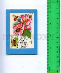 188876 USSR RUSSIA bees Old CALENDAR 1991 year