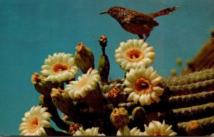 Arizona State Bird and Flower Cactus Wren and Saguaro Blossoms 1969