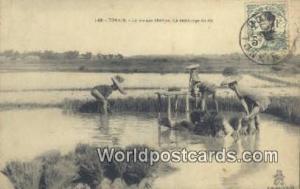Vietnam, Viet Nam,  Nhân Vật Tonkin La Vie aux champs, Le repiquage du riz