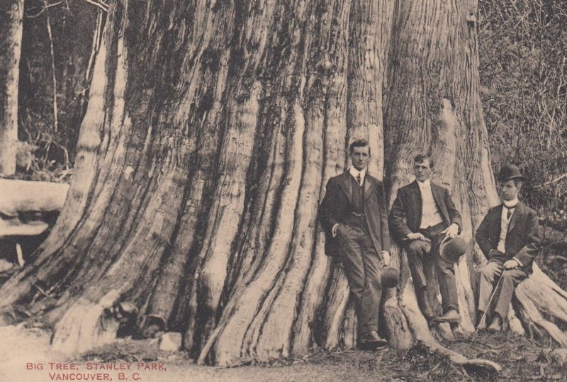 VANCOUVER , B.C. , Canada , 00-10s ; Big Tree Stanley Park , 3 men