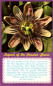Florida Legend Of The Passion Flower 1977