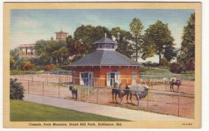 P146 JLs 1930-45 postcard camels park mansion baltimore md