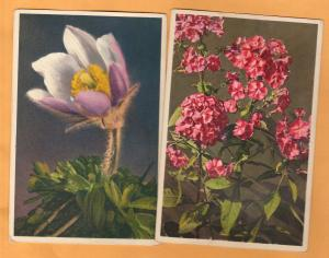 Flower Vintage Postcards Lot of 2, Phlox, Anemone, Floral, Garden