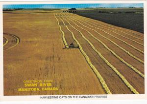 Harvesting Oats , SWAN RIVER , Manitoba , Canada , 60-80s