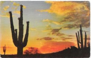 US Arizona Desert Sunset. Sagauros